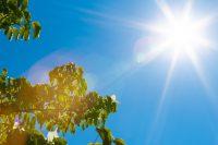 906_sunlight_sky_green_9138